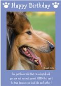 "Rough Collie-Happy Birthday - ""I'm Adopted"" Theme"